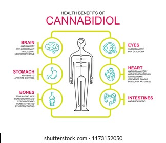 health benefits of cannabiol cbd work in human body infographic information