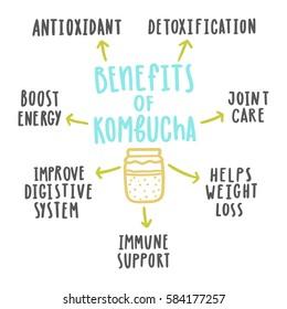 Health benefits of kombucha. Vector hand drawn illustration