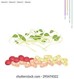 Healthcare Concept, Illustration of Bean Sprouts with Vitamin K, Vitamin B, Vitamin C and Minerals Tablet, Essential Nutrient for Life.
