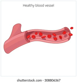 Healthy blood vessel vector illustration