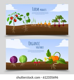 Healthy food horizontal banners with farm products and organic vegetables growing in soil isolated vector illustration