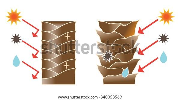 健康な毛皮と損傷した毛皮の表皮