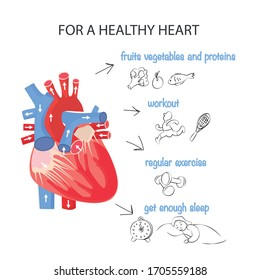 Healthy heart. Rules for the health of the cardiovascular system. Anatomical structure of the heart. Vector illustration of a healthy lifestyle