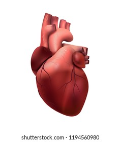 Healthy human heart isolated on white. Health and medicine, organ, muscle, the main organ of man, love, life. 3D illustration. Vector EPS10
