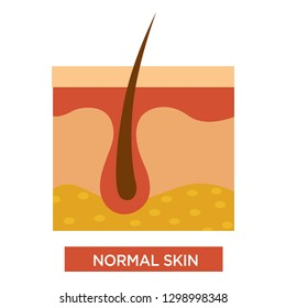 Healthy normal skin structure with body hair and healthcare vector skincare and treatment disease prevention medicine or dermatology medical model of human investing tissue or layer glandlae sebaceae.
