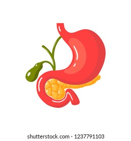 Healthy pancreas concept. Medical vector illustration of pancreas, duodenum, gallbladder and stomach
