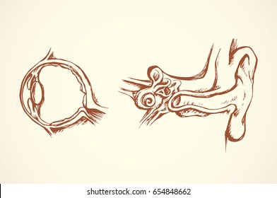 Healthy people internal sensory visual system and external utricle tube sign isolated on white background. Outline black ink hand drawn picture in engraving graphic style pen on paper. View closeup