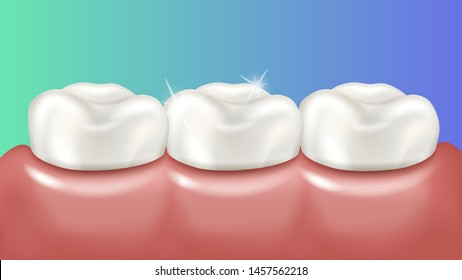 Healthy shiny teeth in pink gums. Vector 3d realistic medical illustration