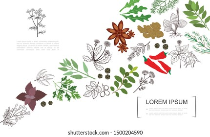 Healthy spices botanical template with colorful and monochrome style natural herbs and plants vector illustration