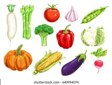 Healthy watercolor drawing vegetables. Pepper and tomato, garlic, broccoli and radish, corn, eggplant and pumpkin, pea, asparagus, cauliflower and daikon veggies for farming design