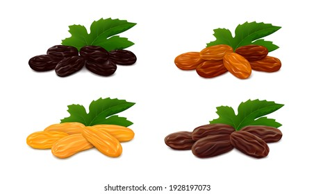 Heaps of raisins with leaf isolated on white background. Collection of different types of dried grapes (Zante currant, Sultana, Jumbo Golden and brown Thompson) Realistic vector illustration.