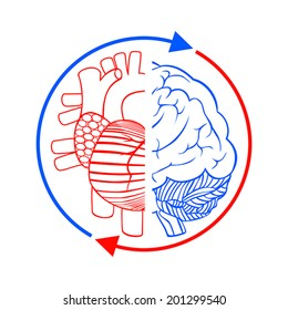 Heart, brain and blood circulation. Sign showing the connection, balance between the heart and the human brain