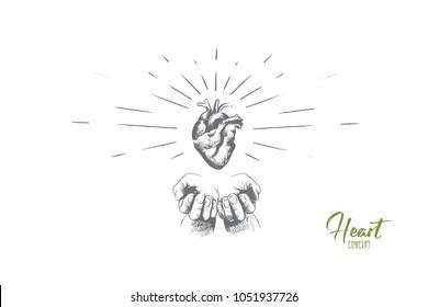 external structure of heart diagram