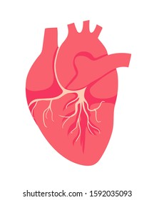 The heart is the internal organ of human. Symbol of Cardiology