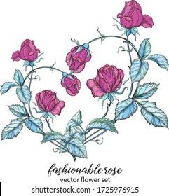 Heart of rose flowers. Pink rose. Vector flower arrangement.