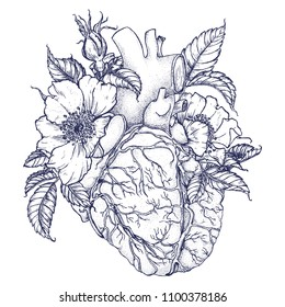 Heart and roses with leaves. Drawing by hand in vintage style. Elegant stylish illustration for printing on clothing, posters, dishes and other surfaces. Anatomy, botany.
