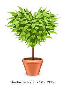 Heart shaped tree in the pot isolated on white background.