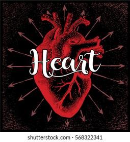 Heart vector.