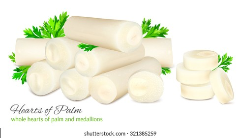 Hearts of palm with parsley. Whole stalks and medallions. Vector illustration.