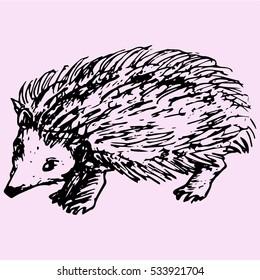 hedgehog, doodle style sketch illustration hand drawn vector