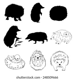 Hedgehog set of silhouettes and graphic drawings.