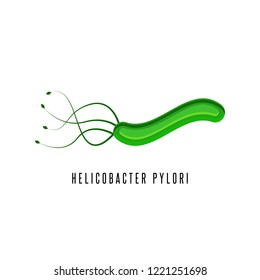 Helicobacter pylori illustration microaerophilic bacterium which infects various areas of the stomach and duodenum