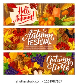 Hello Autumn festival banners of seasonal harvest for fall time holidays celebration. Vector pumpkin, corn and mushrooms cep or chanterelle, rowan berry and oak acorns in autumn maple leaves