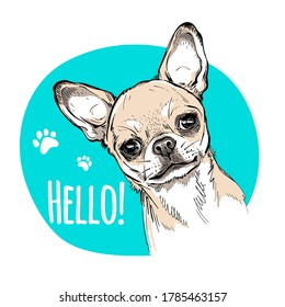 Hello illustration with cute chihuahua