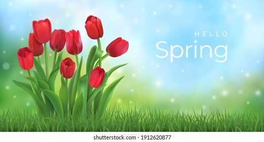 Hello spring. Bouquet of red tulips wit fresh green grass. Vector illustration