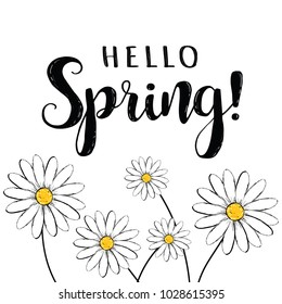 Hello spring! Hello Spring floral illustration with daisies. Hello Spring card, poster for design