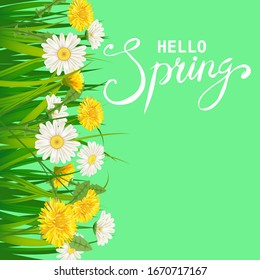 Hello Spring lettering template background with flowers dandelions and daisies, chamomiles, grass. Vector illustration. Fresh design for posters, flyers, greeting card, invitation
