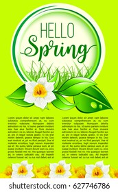 Hello Spring poster for springtime holidays greeting. Vector design of yellow blooming daffodils blossoms or narcissus flowers on green grass. Floral spring bouquets and flourish bunches with leaves