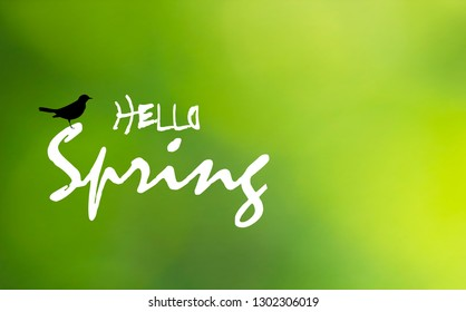 Hello Spring text and black bird on green blurry background. Springtime bright greeting card with blackbird icon silhouette. Floral march wallpaper, vector design eps 10