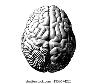 Hemispheres human brain engraving top view monochrome illustration isolated on white background