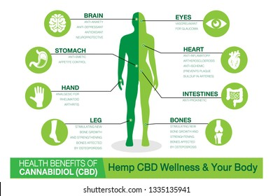 Hemp CBD Wellness and your body. Health benefits of Cannabidiol CBD from cannabis, hemp, marijuana effect on body. vector infographic green concept   on white background.