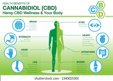 Hemp CBD Wellness and your body. Health benefits of Cannabidiol CBD from cannabis, hemp, marijuana, marihuana  effect on body. vector infographic on green grandient background. Easy  to used.