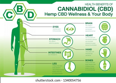 Hemp CBD Wellness and your body. Health benefits of Cannabidiol CBD from cannabis, hemp, marijuana effect on body. vector infographic on green gradient background.easy to used.