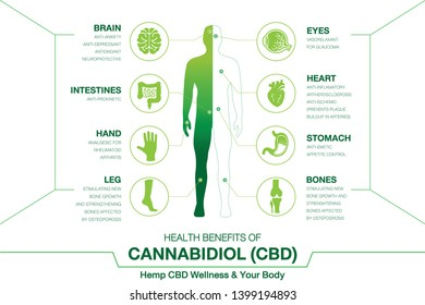 Hemp CBD Wellness and your body. Health benefits of Cannabidiol CBD from cannabis, hemp, marijuana, marihuana effect on body. vector infographic on white background.