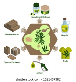Hemp plant, cannabis leaf and hemp products. Processing and production. Infographics. Hemp cbd oil. Pharmaceutical, food, fuel and weaving industries. Production of paper, eco building materials.