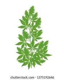 Hemp plant. Marijuana or cannabis indica tree. Isolated vector illustration on white background.
