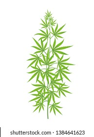 Hemp plant. Marijuana or cannabis sativa green tree. Isolated vector illustration on white background.