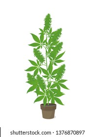 Hemp potted plant. Marijuana or cannabis indica tree. Isolated vector illustration on white background. Weed Growing in a pot at home.