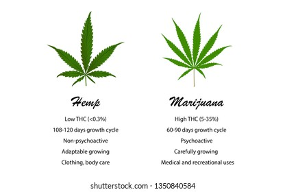 Hemp vs Marijuana, illustration about cannabis, healthcare medical and science vector.
