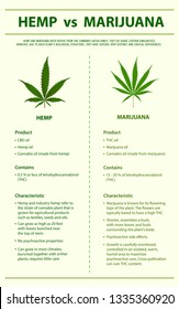 Hemp vs Marijuana vertical infographic illustration about cannabis as herbal alternative medicine and chemical therapy, healthcare and medical science vector.