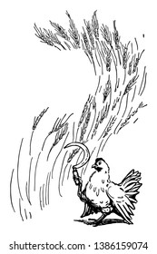 A hen cutting wheat by sickle, vintage line drawing or engraving illustration