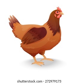 hen isolated on white background. Vector illustration