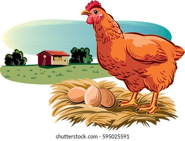 Hen with its nest of eggs.