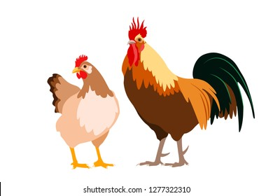 Hen and rooster couple vector illustration. Poultry farm