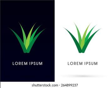 Herb, grass, aloe vera , plant ,logo, symbol, icon, graphic, vector.