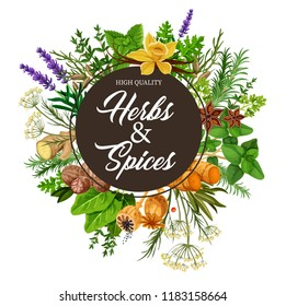 Herb and spice frame with spicy plants, food packaging label. Basil, mint and rosemary, ginger, vanilla and anise, thyme, nutmeg and dill, parsley, sorrel, turmeric and lavender seasoning